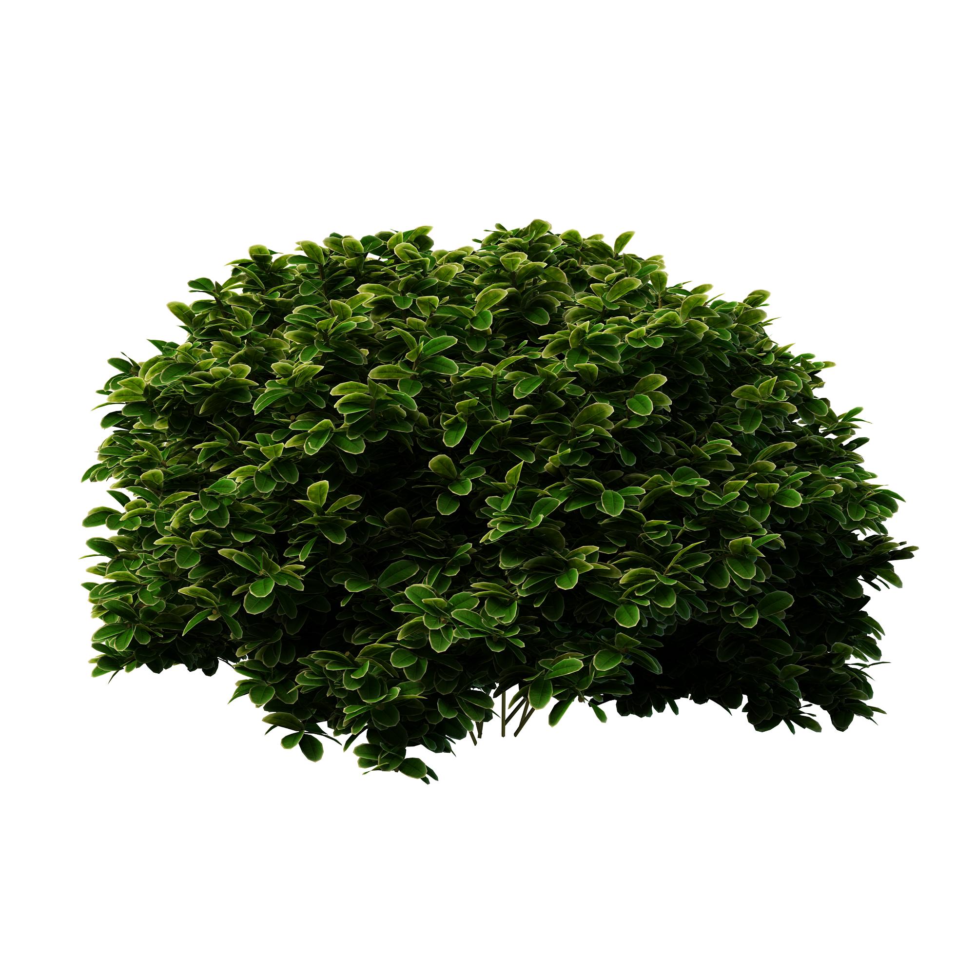 Shrubs bush Png #42049.