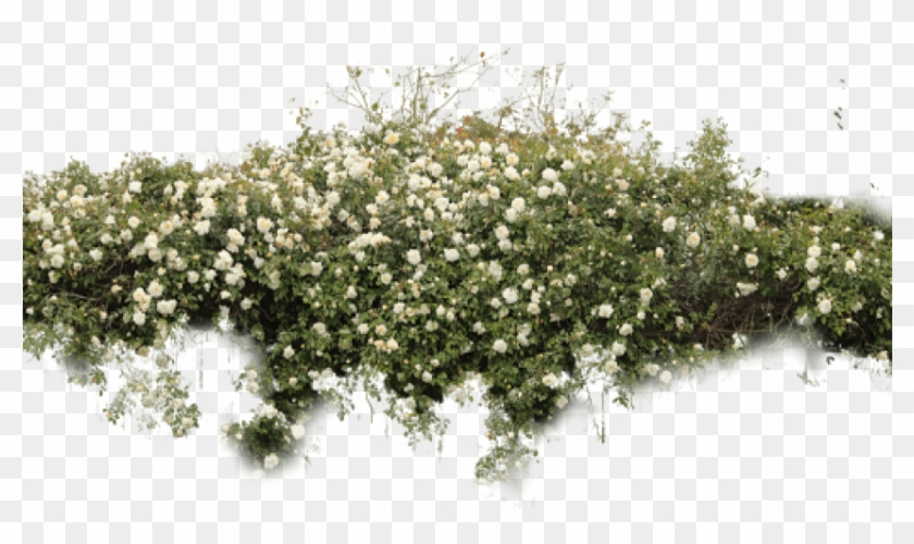 Free Png Download Bushes Free Png Images Background.