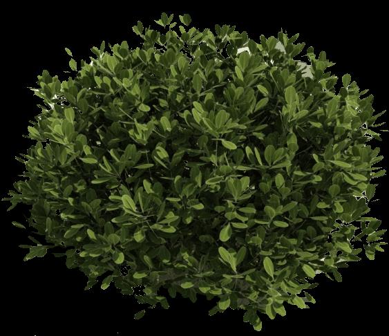 Green Bush transparent PNG.