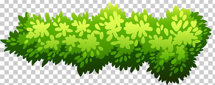 Shrub Illustration PNG, Clipart, Background Green, Bush.