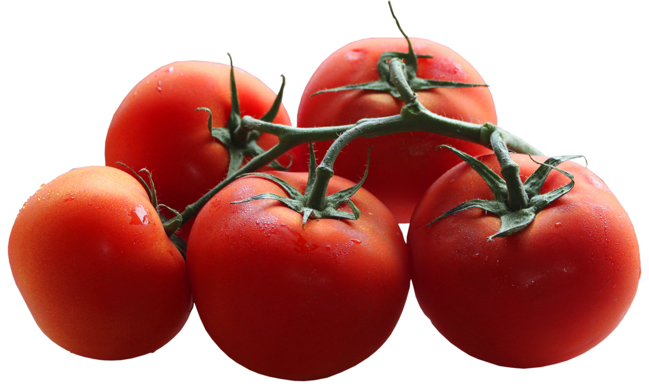 Tomatoes Clipart.