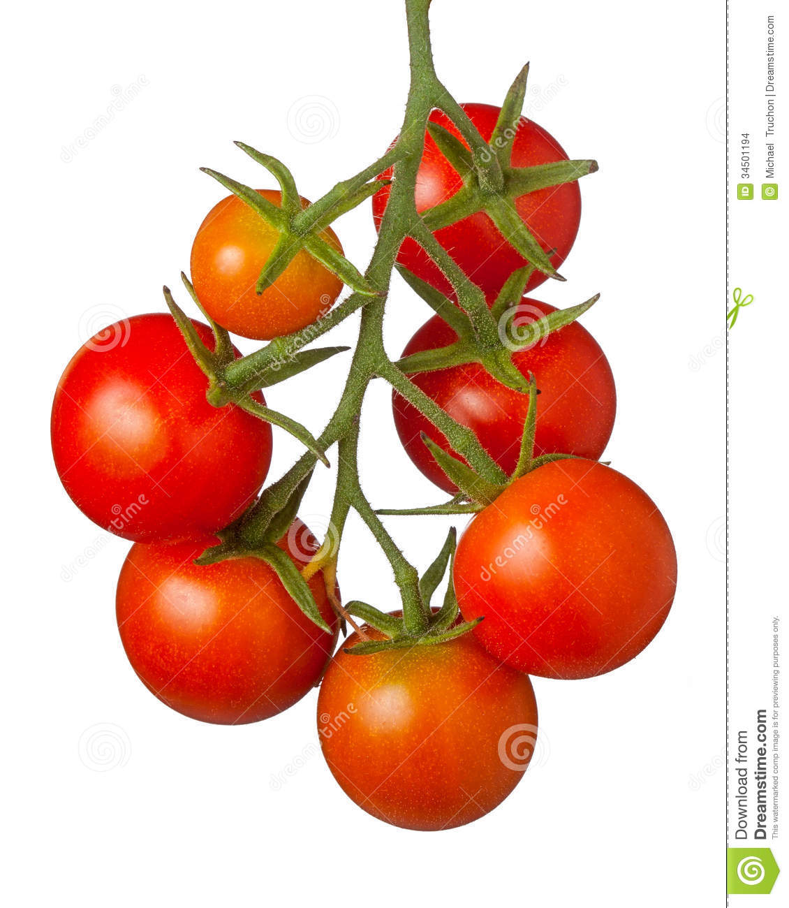 Cherry Tomatoes Stock Images.