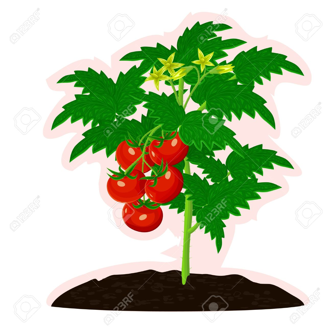 Tomato Bush With Fruits And Flowers Royalty Free Cliparts, Vectors.