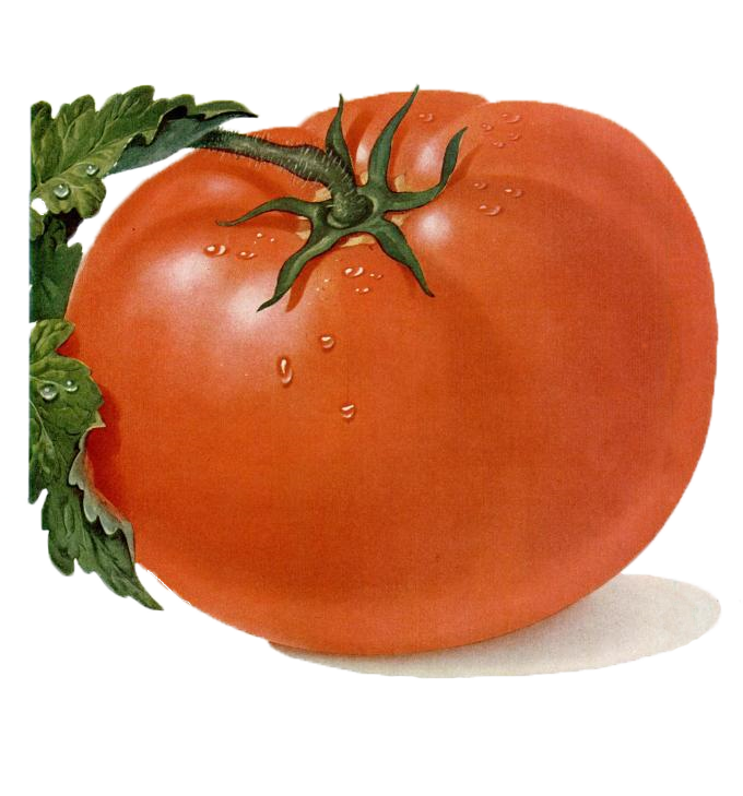 Best Tomato Clipart #17625.