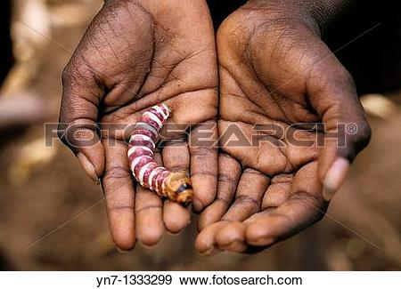 Stock Photograph of Hands holding an example of aboriginal bush.