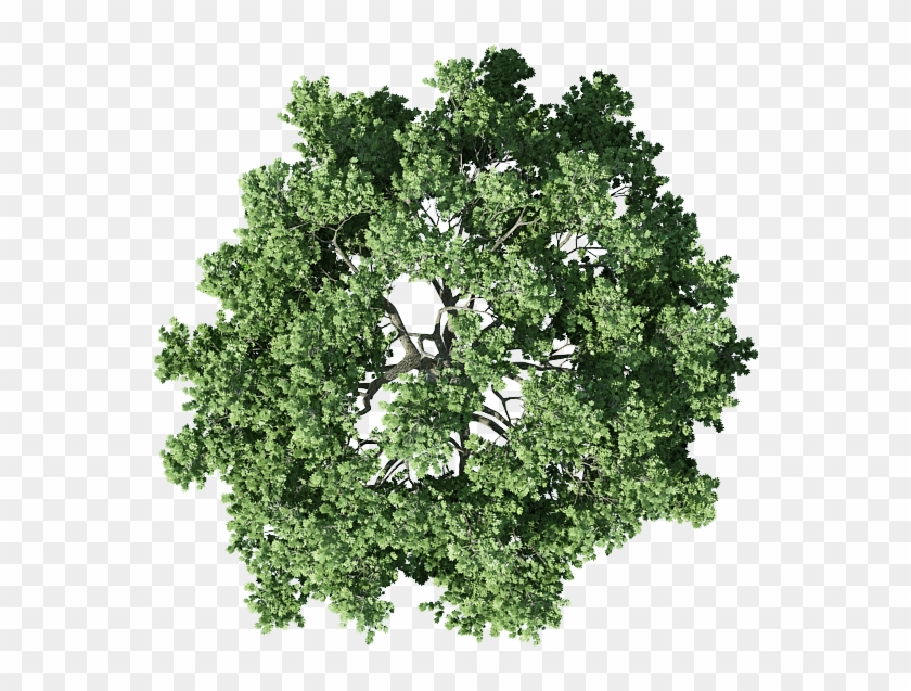 Shrub Png For Free Download On.