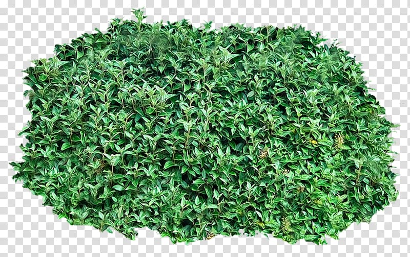 Shrub , tree top transparent background PNG clipart.