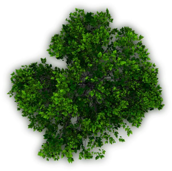 Bushes clipart tree top, Picture #313251 bushes clipart tree top.