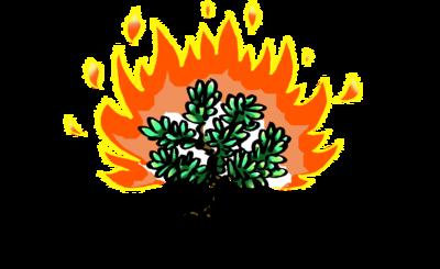 Image: Burning Bush.