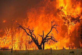 Bushfire clipart.