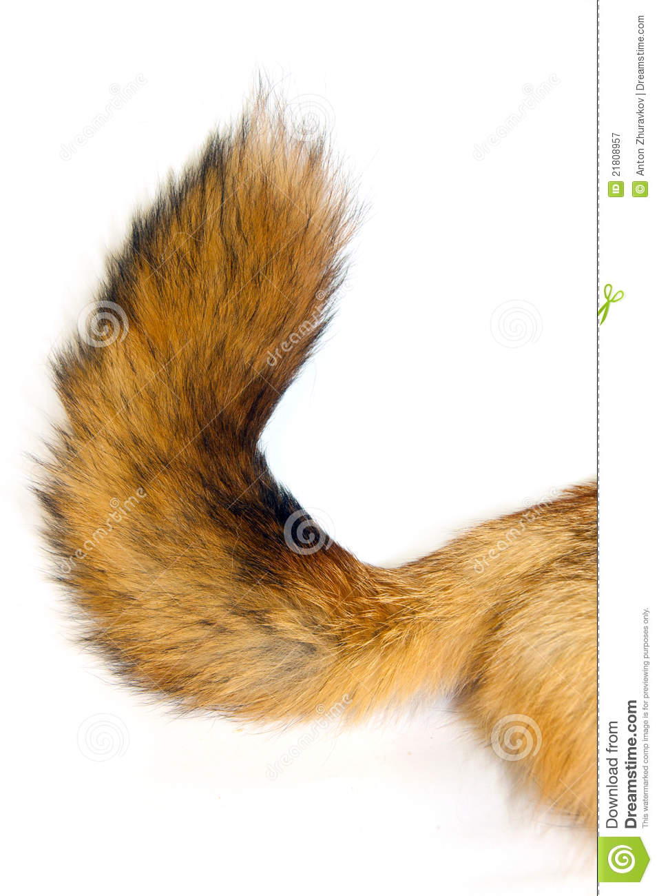 Red Fox Tail Royalty Free Stock Photography.