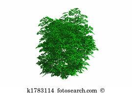 Green bush Stock Illustrations. 3,374 green bush clip art images.