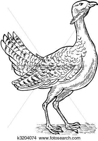Drawings of drawing of the Great bustard bird k3204074.