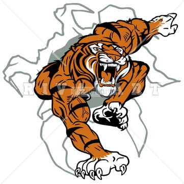 Mascot Clipart Image of A Tiger Busting Thru The Wall http://www.