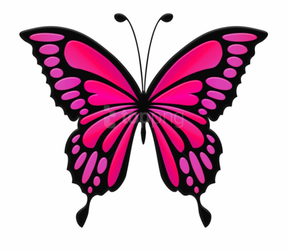Butterfly Png Clipart Transparent Background.