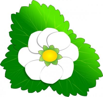 White flower clipart #14