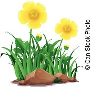 Buttercups Stock Illustrations. 312 Buttercups clip art images and.