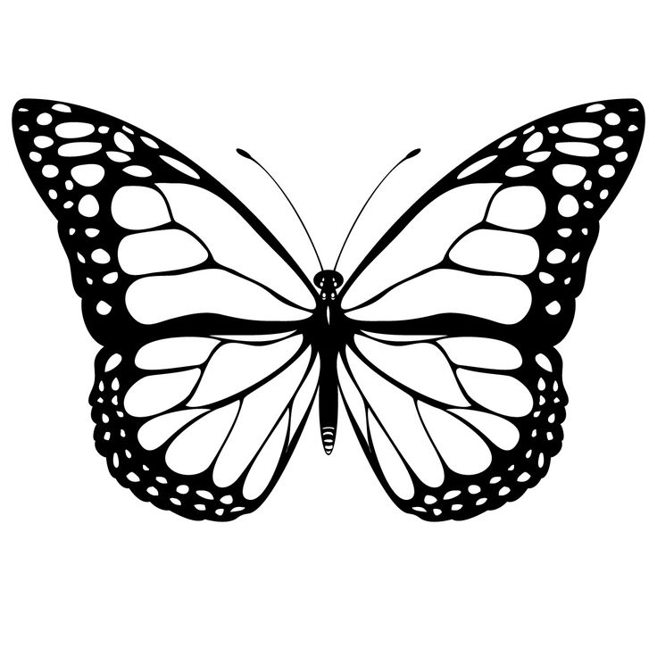 Free Butterfly Images Black And White, Download Free Clip Art, Free.