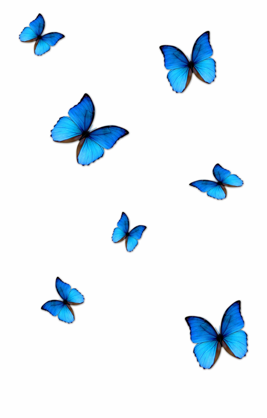 Kisspng Butterfly Blue Phengaris Alcon Blue Butterfly.
