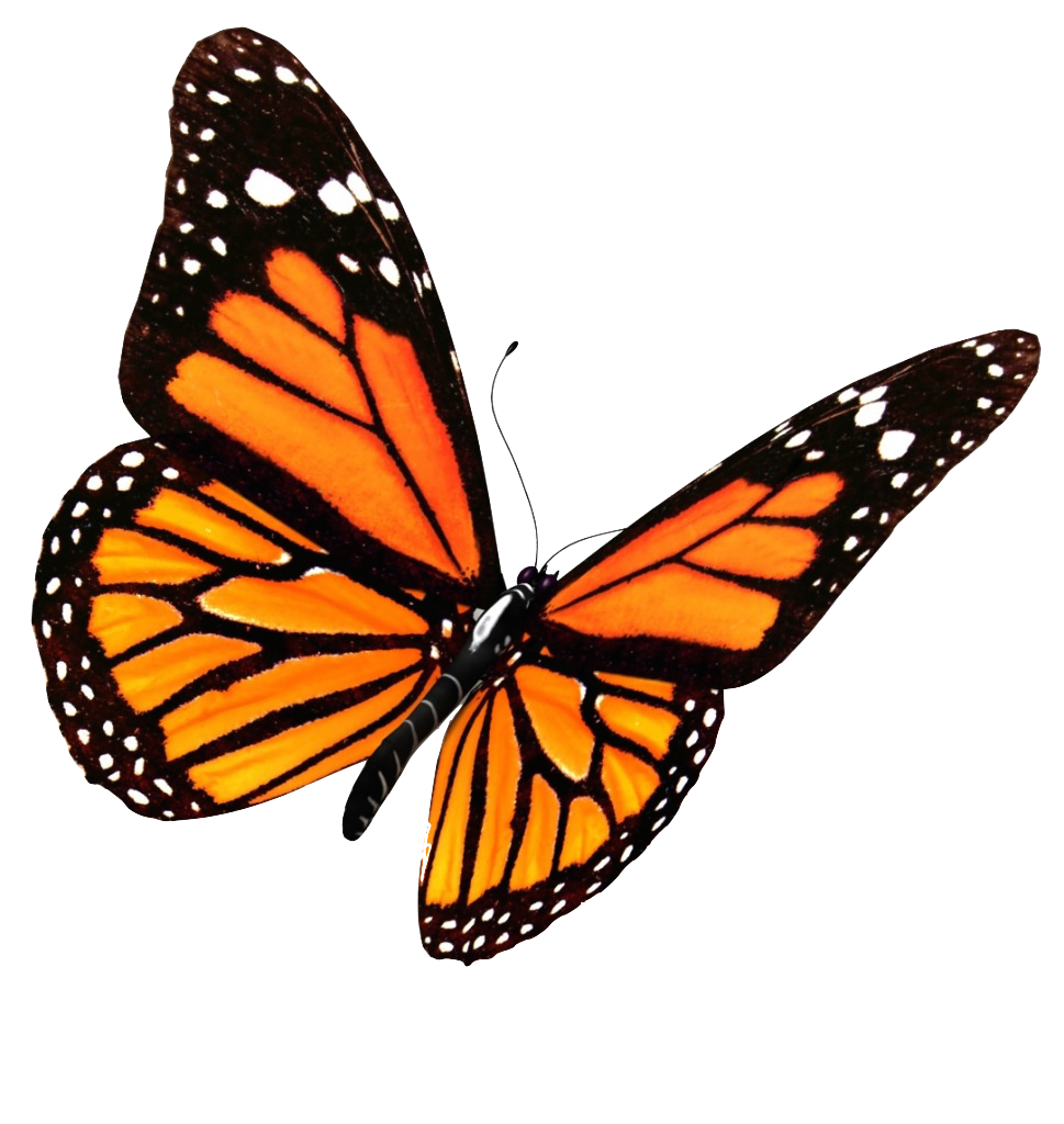 Flying Butterflies PNG Transparent Image.