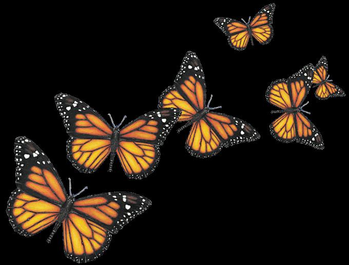 Six Butterflies transparent PNG.