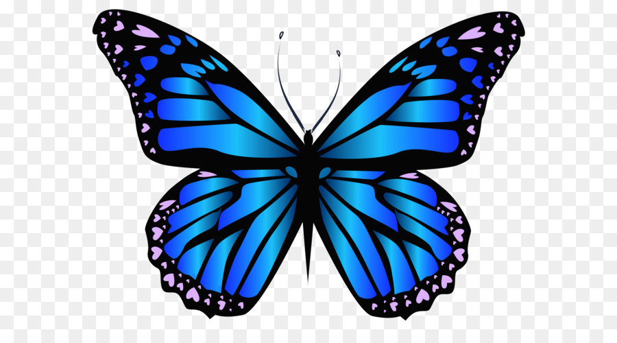 Monarch Butterfly Drawing png download.
