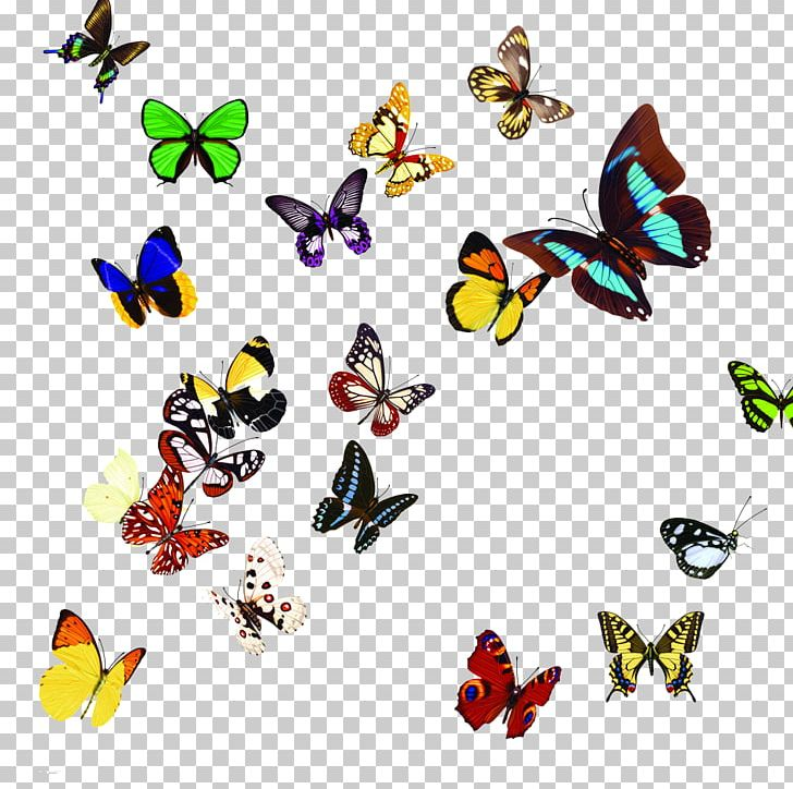 Butterfly PNG, Clipart, Animal, Animal Figure, Butterflies And Moths.