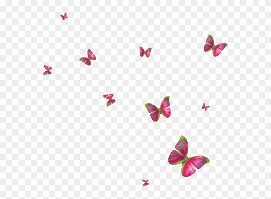 Clipart Butterflies Butterfly Clip Art, Butterflies,.