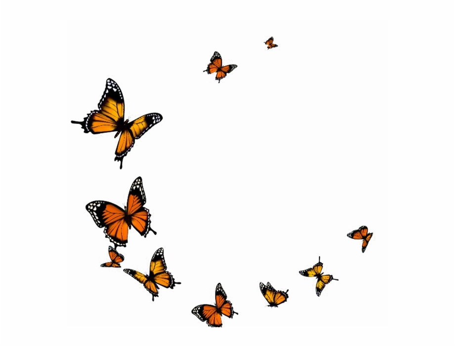Flying Butterfly Png Transparent Image.