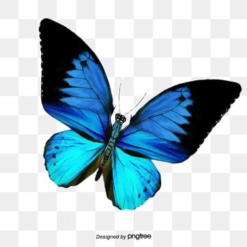 Butterfly PNG Images, Download 8,515 PNG Resources with Transparent.