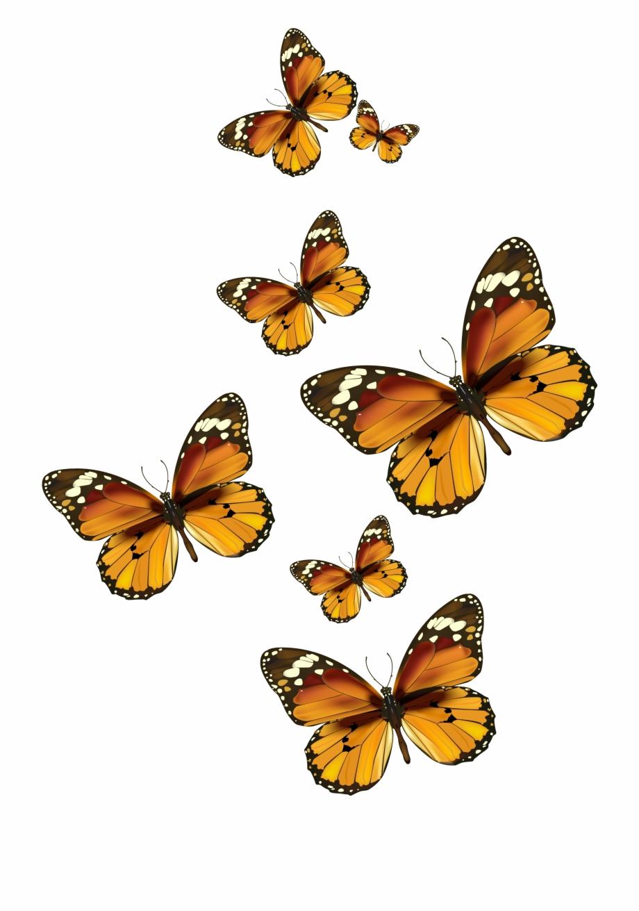 Butterflies Vector Png Clipart Pictureu200b Gallery.