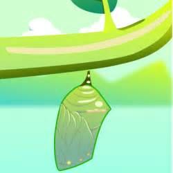 Similiar Butterflies Cocoon Cartoon Keywords.