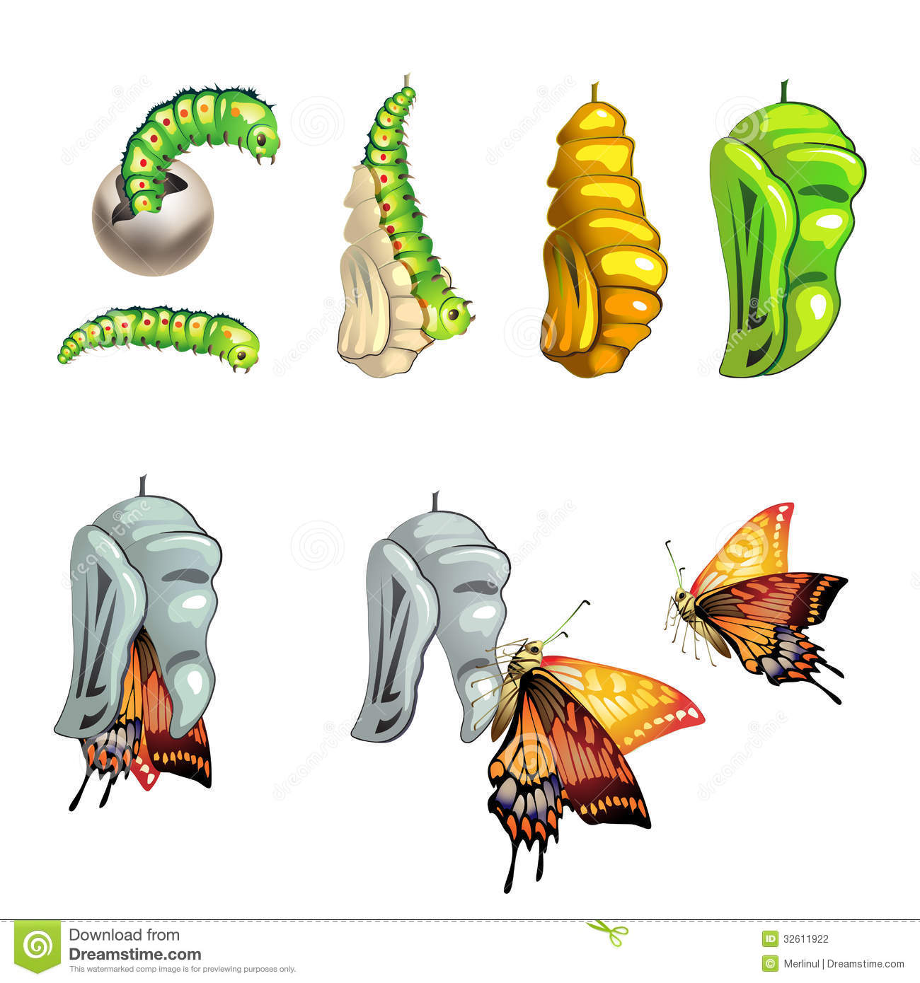 Butterfly Cocoon Stock Illustrations.