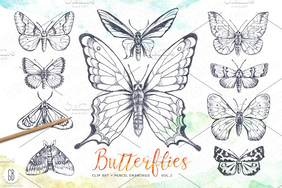Butterfly, pencil drawing ~ Illustrations on Creative Market.