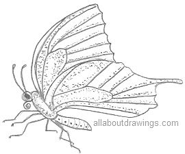 Butterfly Pencil Drawings.