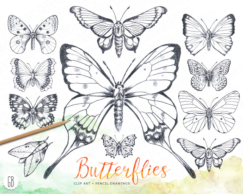 Butterfly pencil hand drawn vintage inspired butterflies.