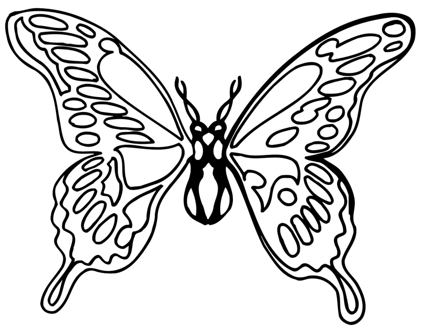 Butterfly black and white caterpillar clipart black and white free.