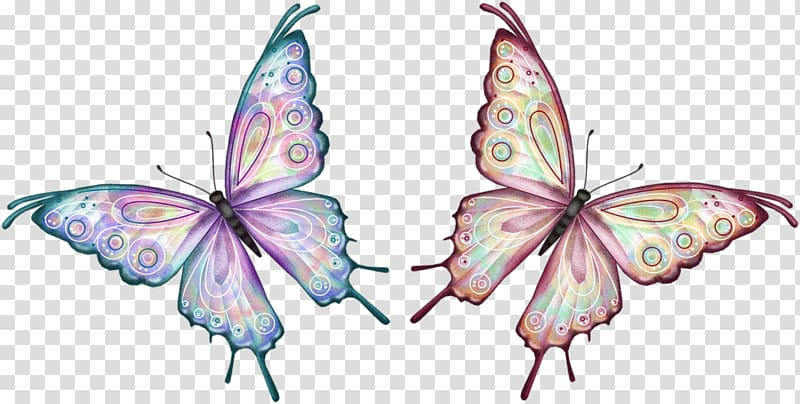 Butterfly Animation , shadow box transparent background PNG clipart.