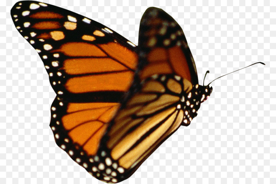 Free Animated Butterfly Png & Free Animated Butterfly.png.