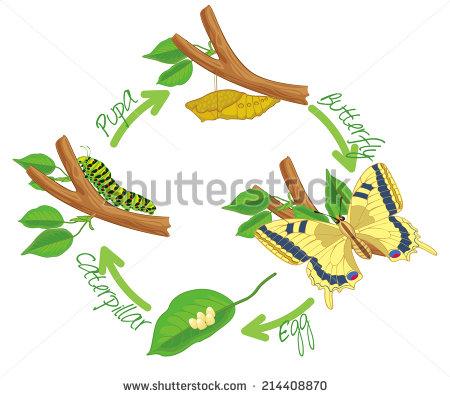 Caterpillar To Butterfly Stock Photos, Royalty.