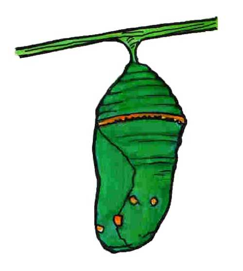 Butterfly Cocoon Drawing Cocooned clipart - Cli...