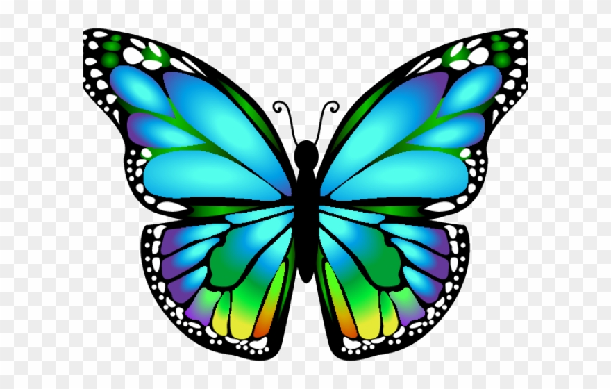 Dragonfly Clipart Butterfly.