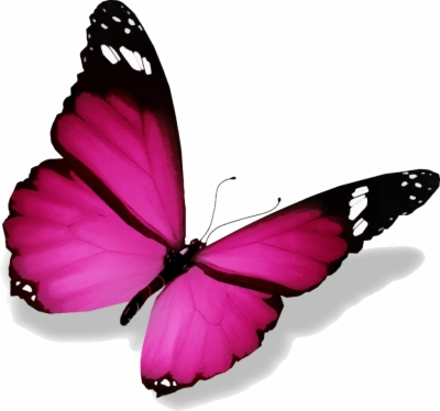 Butterfly Png 3D Images.