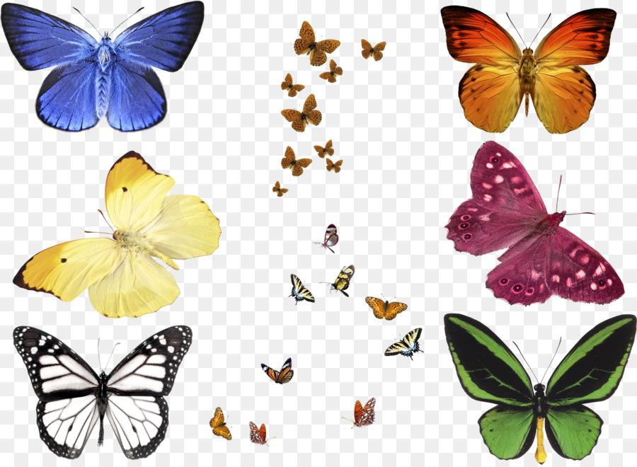 Butterfly Effect.