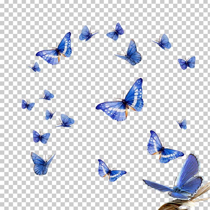 Butterfly Effect Assalamualaikum Beijing PNG, Clipart.