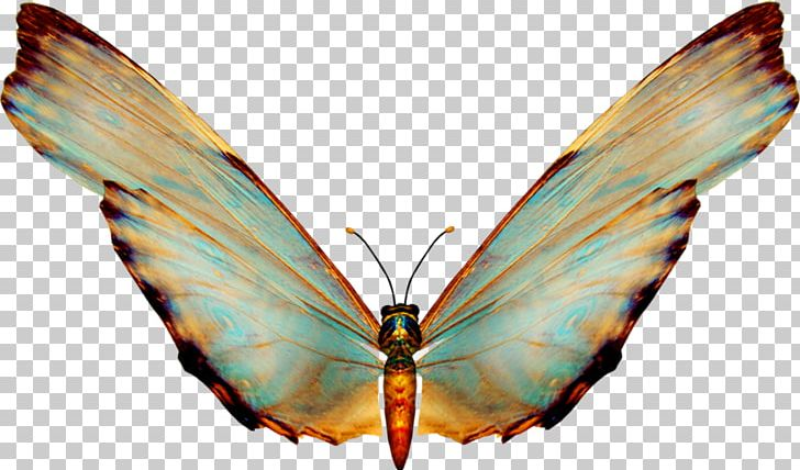 Butterfly Adobe Photoshop Portable Network Graphics Psd PNG.