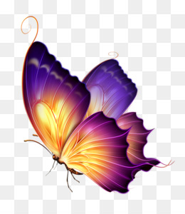 Butterfly Group PNG and Butterfly Group Transparent Clipart.