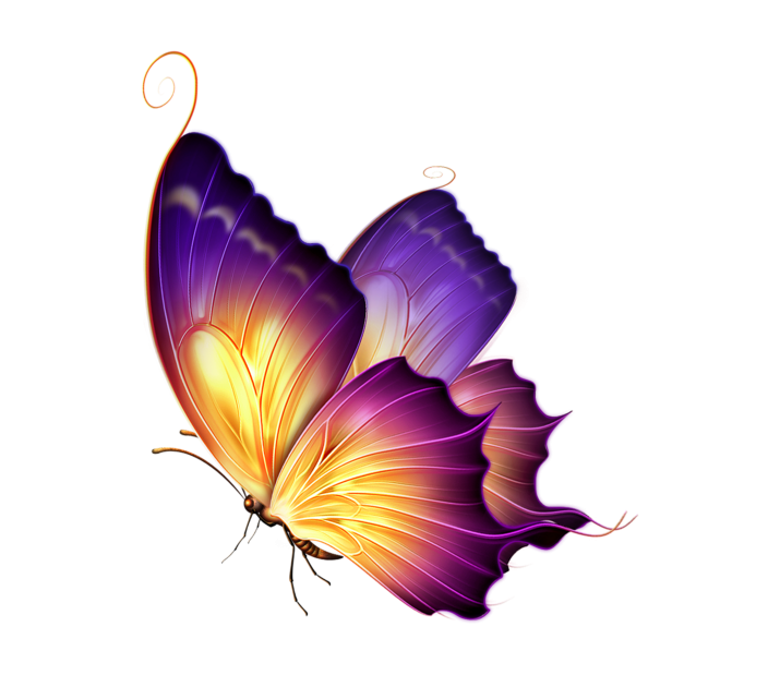 Butterfly Clipart PNG Image Free Download searchpng.com.