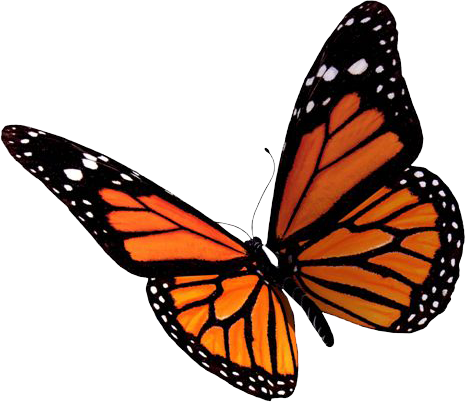 Butterfly PNG Images Transparent Free Download.