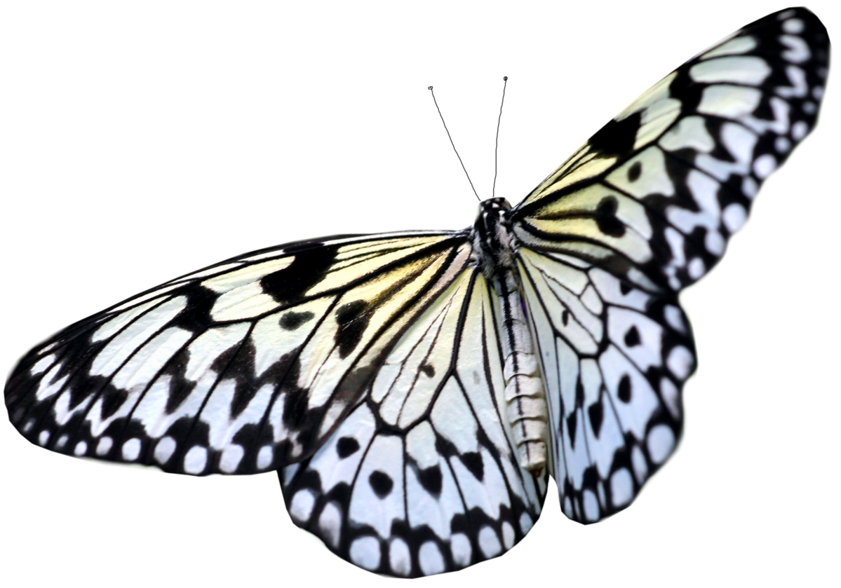 Large White PNG Transparent Butterfly Clipart.